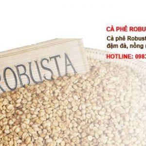 robusta-khong-tam-so-22