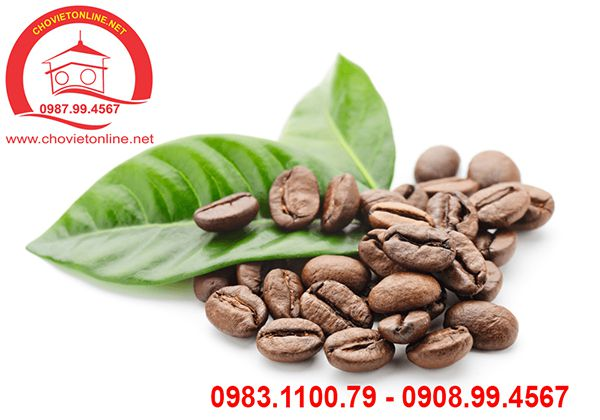 ca-phe-arabica-so-07-1 - Copy