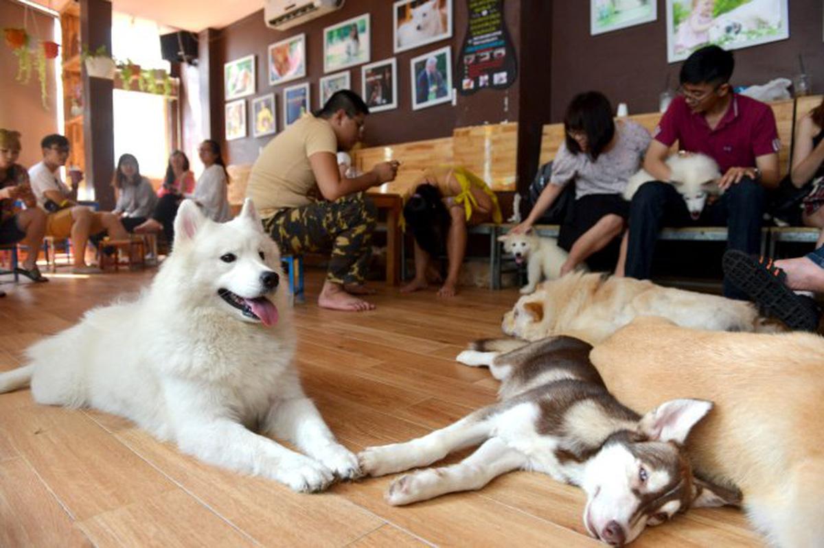 Café Pet được nhiều bạn trẻ yêu thích.