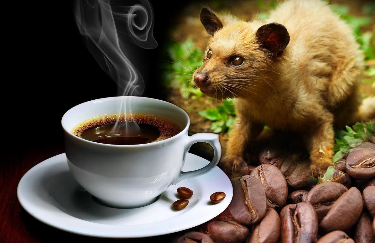 Cà phê chồn ở Việt Nam