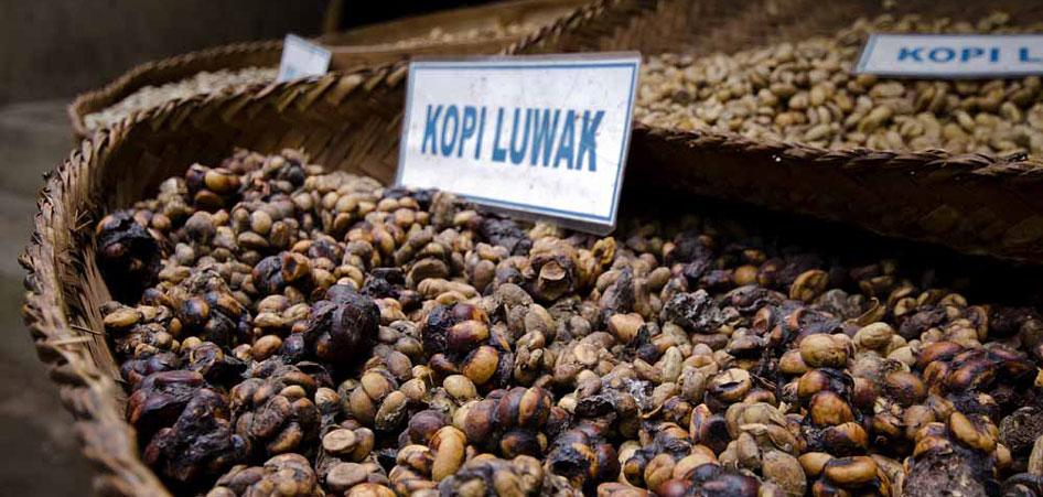 Cà phê chồn bắt nguồn từ Indonesia