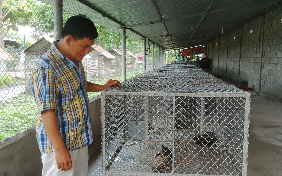 Trang trại nuôi chồn ở Việt Nam