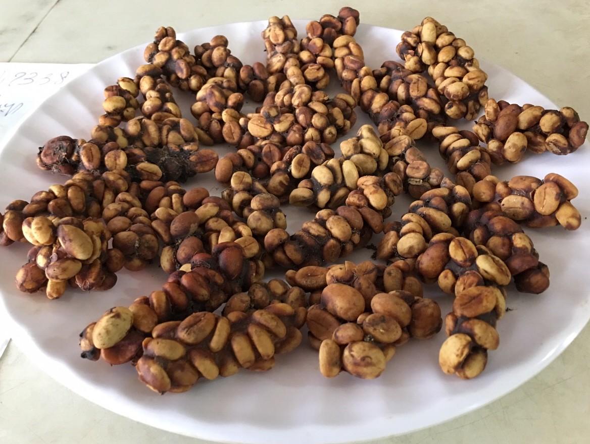 Cà phê chồn giá rẻ được bán rộng rãi