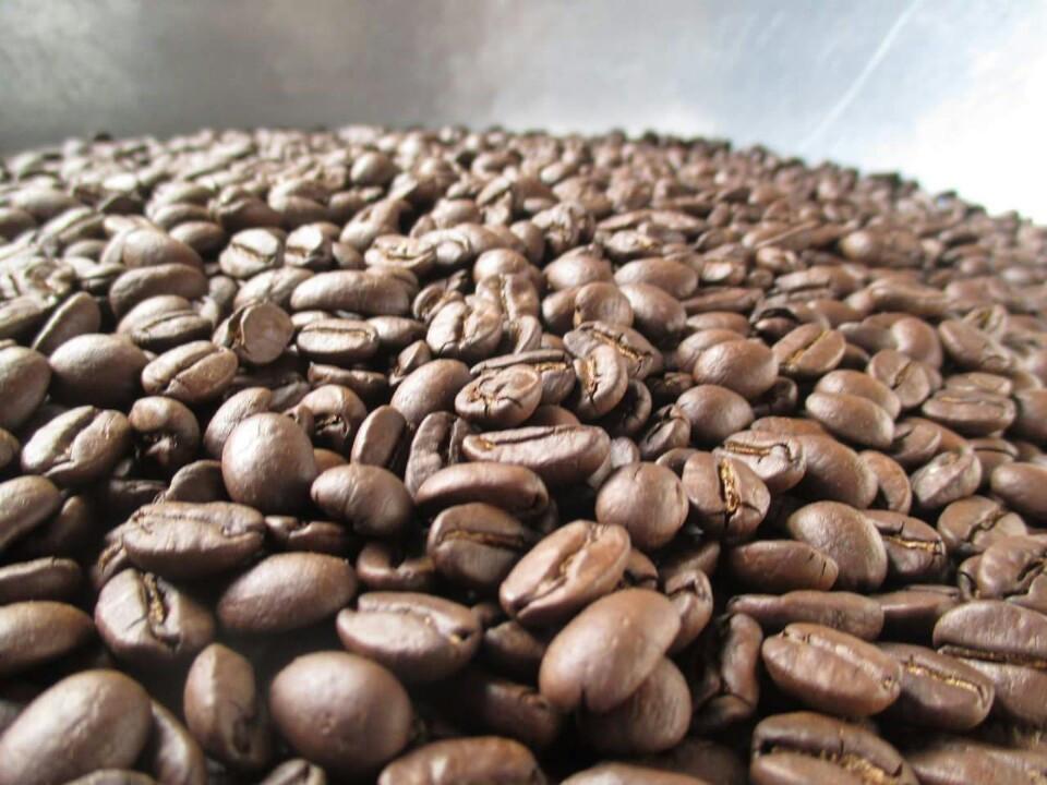 i khuẩn có trong hạt cà phê có thể điều chỉnh hương vị