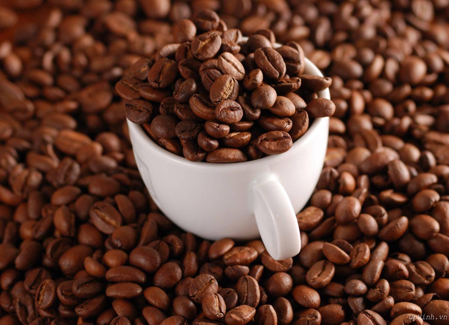 Hạt cà phê ngon và đạt chuẩn chất lượng sẽ làm nên thương hiệu uy tín cho chủ cà phê.