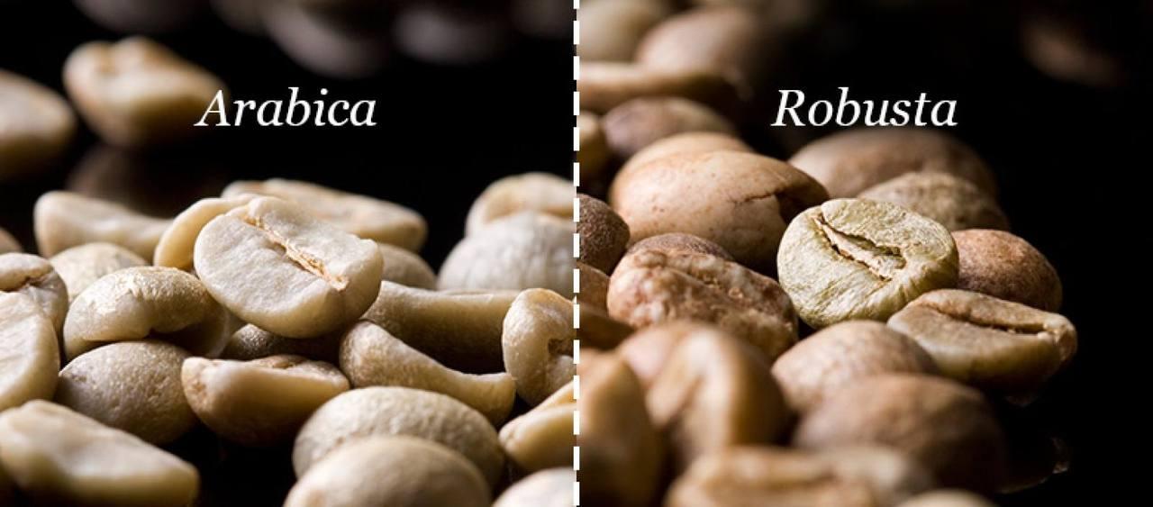 Phân biệt Robusta và Arabica