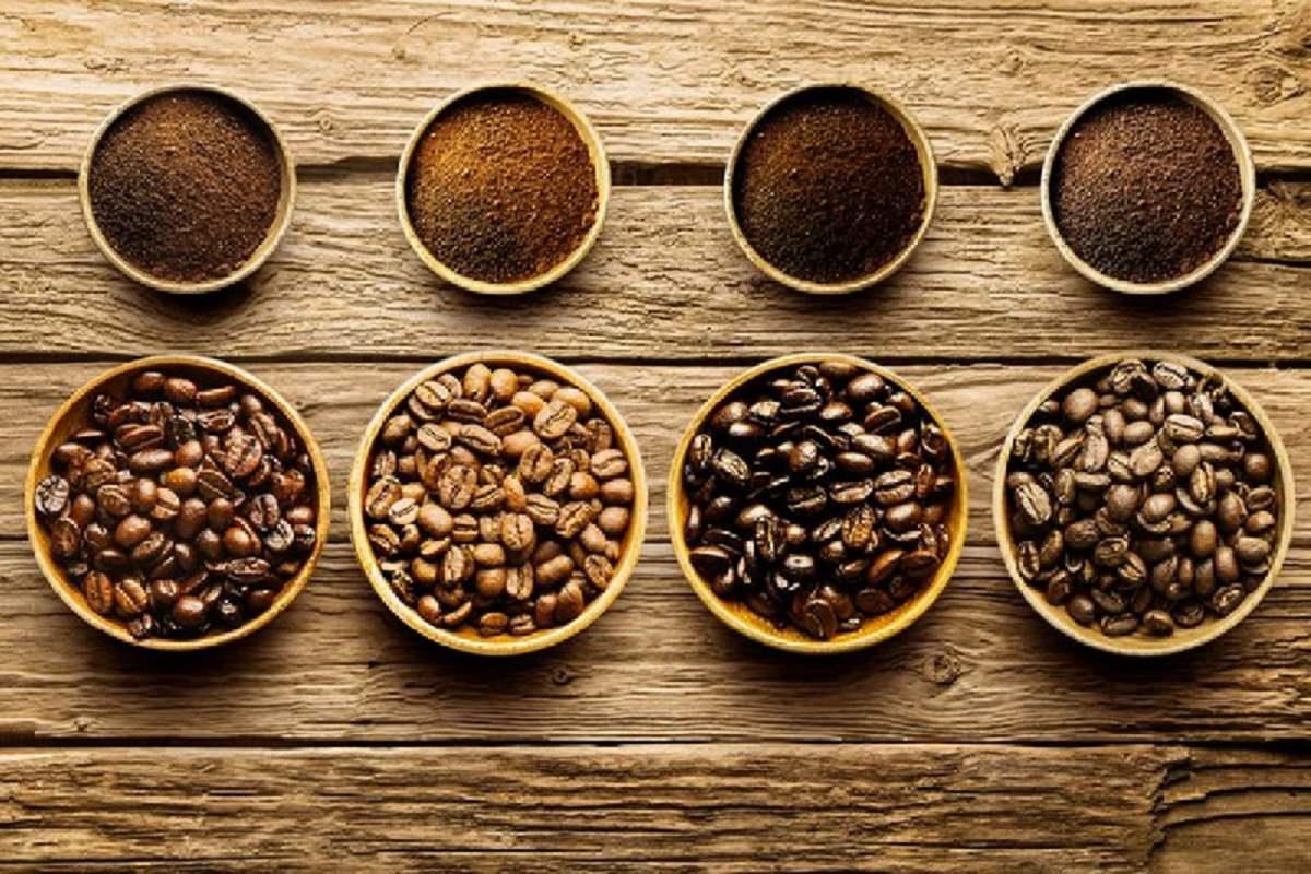 Robusta – Giống cà phê phổ biến nhất tại Việt Nam
