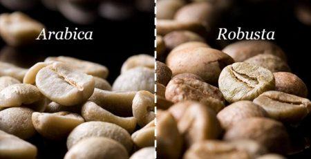 Cà phê vối – Cà phê Robusta Việt Nam