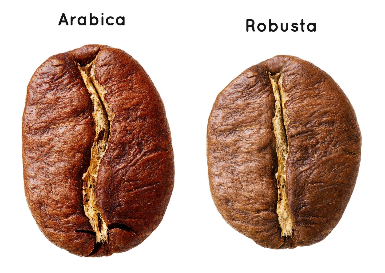 Hình dạng 2 loại cà phê