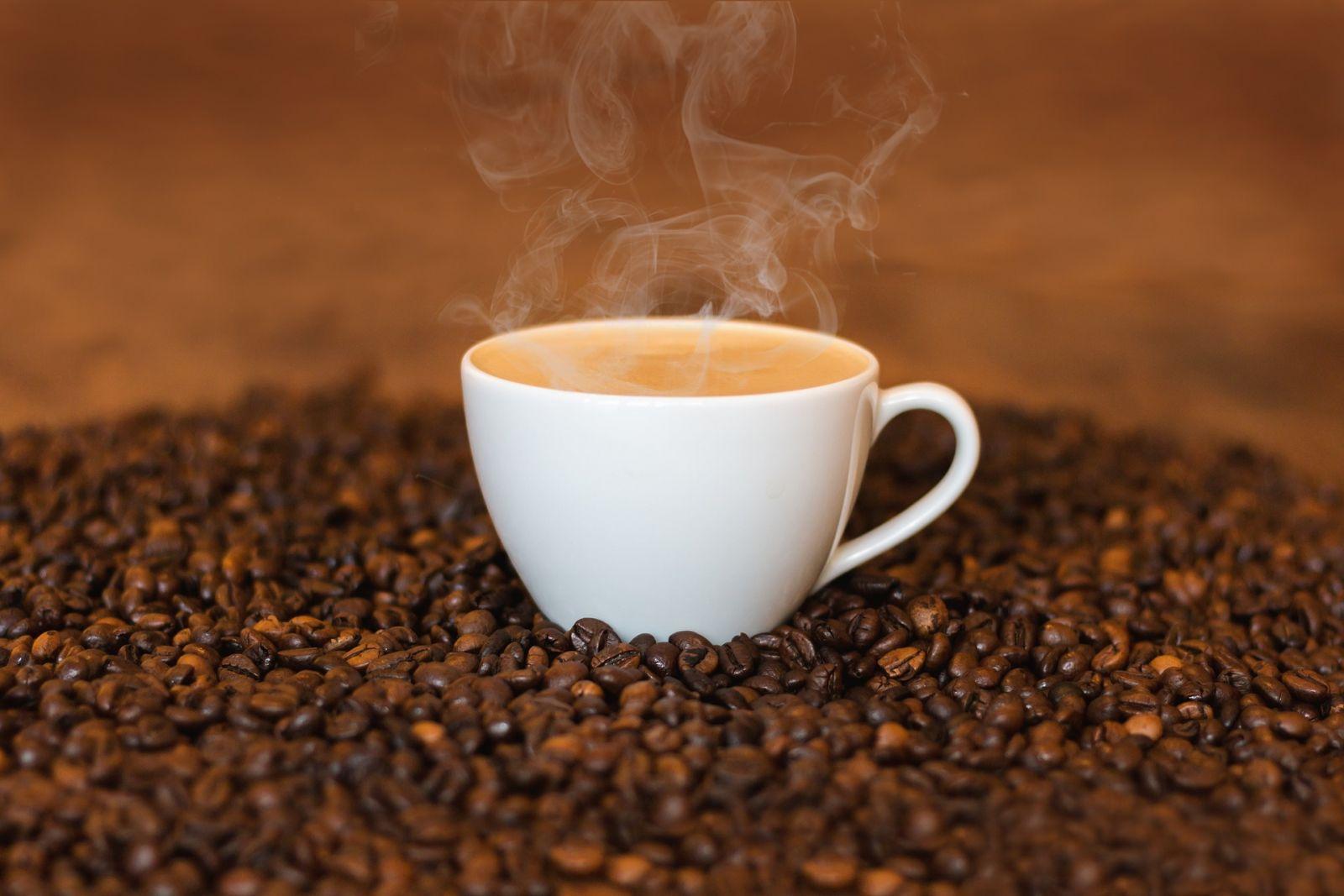 Cà phê Catimor lai tạo giá thành tốt