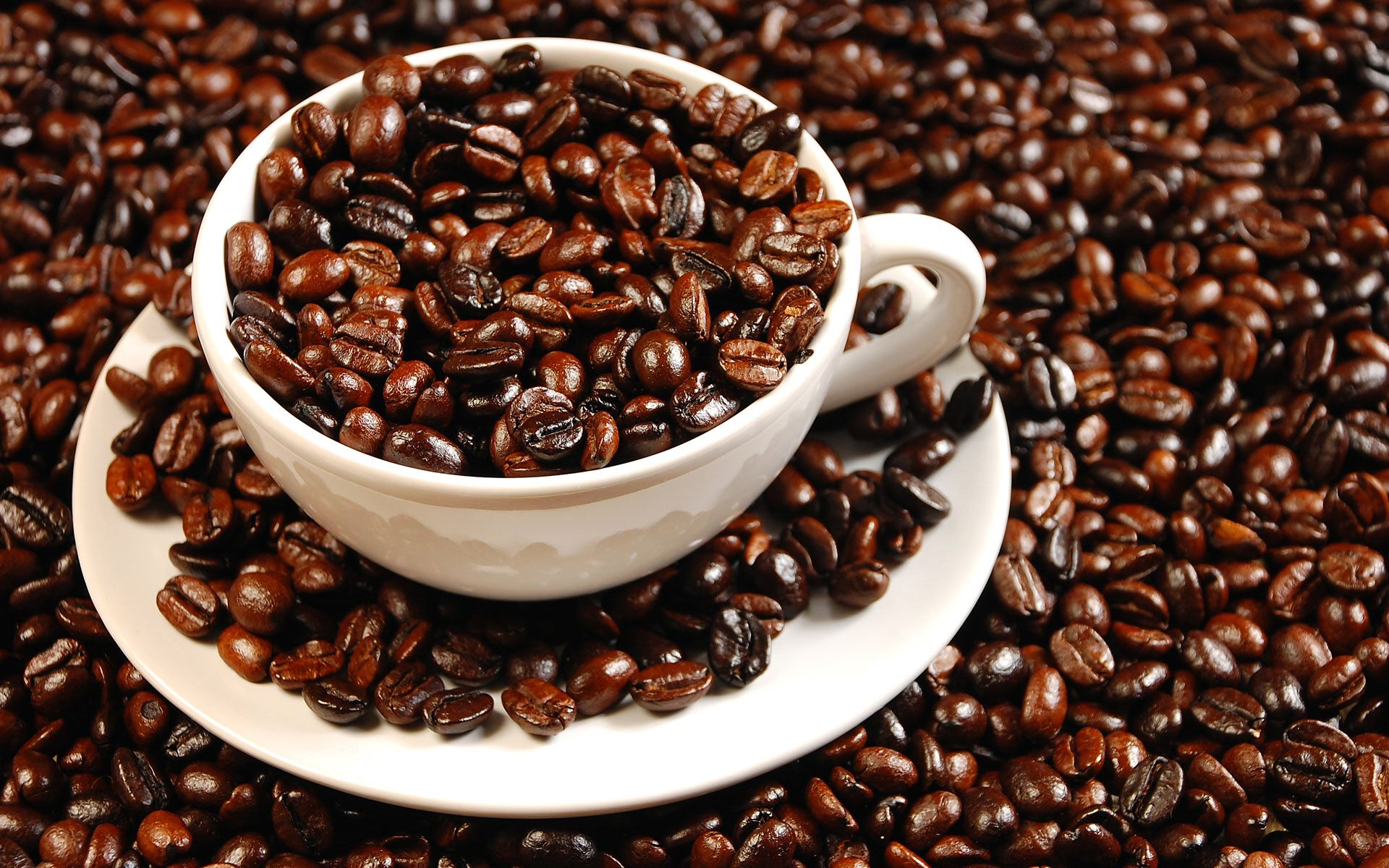 Cung cấp cà phê hạt rang Arabica