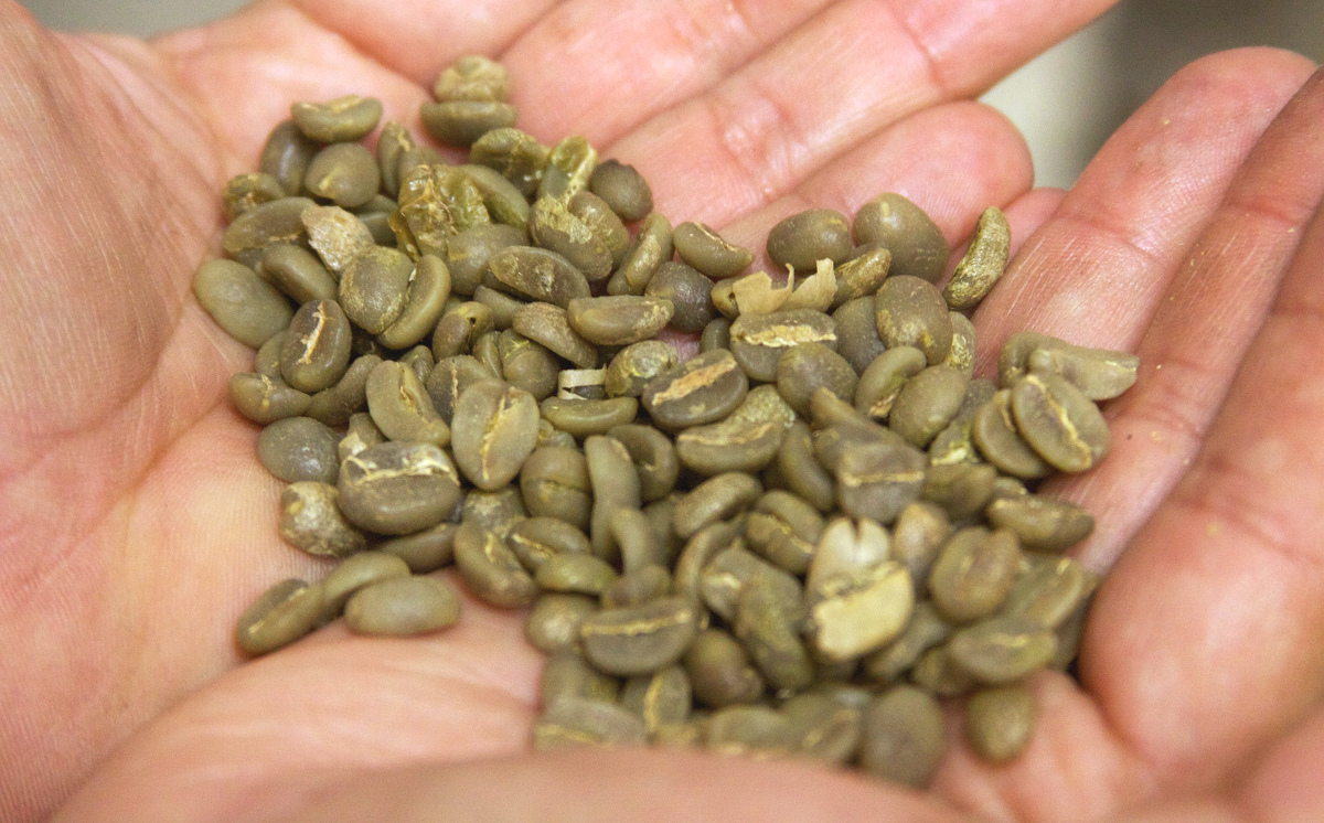 Arabica Typica