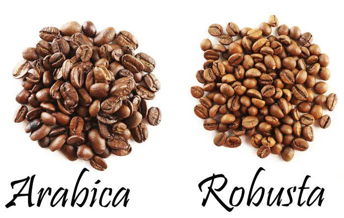 Sự khác nhau giữa cà phê Robusta với cà phê Arabica