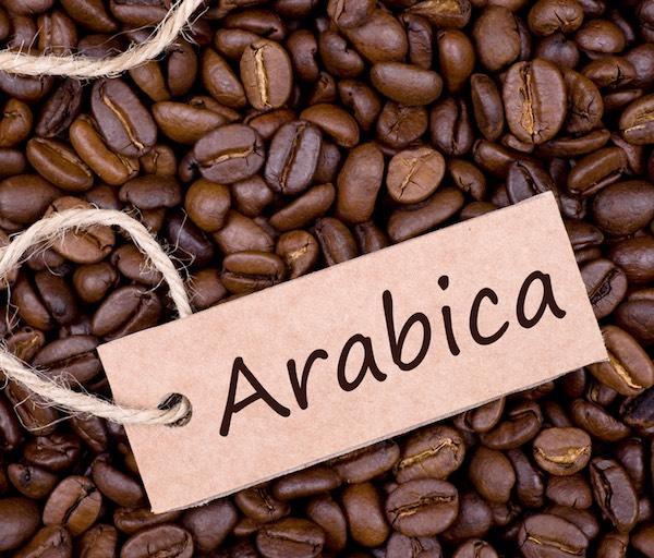 Hình dạng cà phê Robusta