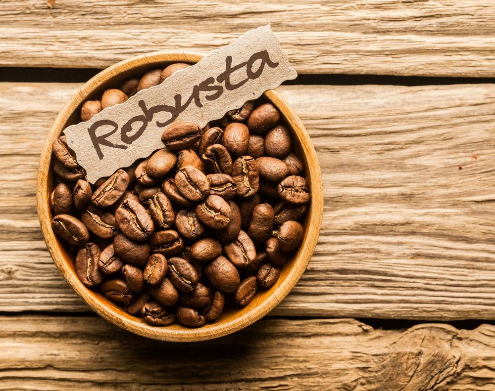 Cà phê Robusta chiếm sản lượng chủ yếu cà phê trồng tại Việt Nam