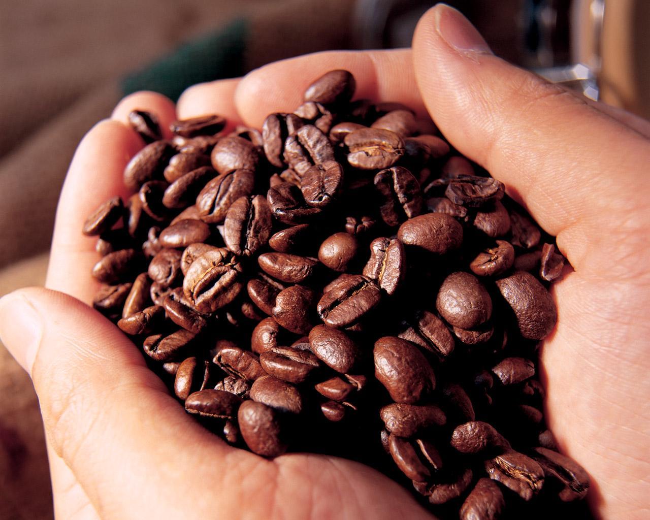 Vị đắng của cà phê đến từ nhiều hợp chất tự nhiên có sẵn hoặc tạo thành khi rang xay