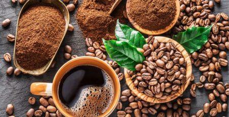 hương vị đặc biệt riêng có của cà phê chồn đến từ loài chồn hương
